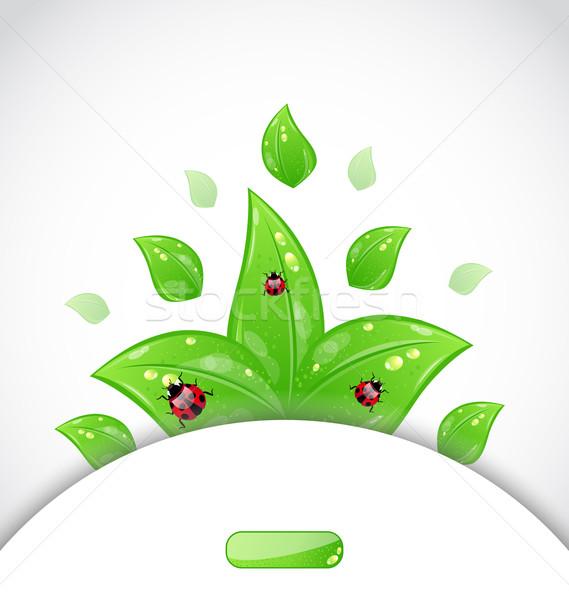üzlet brosúra sablon zöld levelek katicabogarak illusztráció Stock fotó © smeagorl