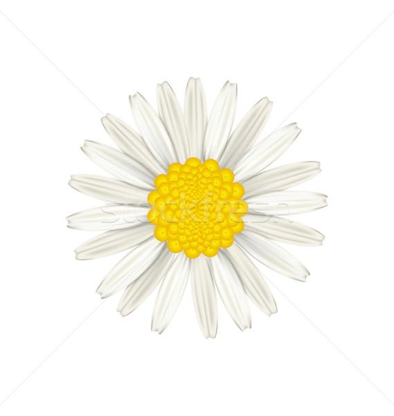 Camomile flower isolated on white background Stock photo © smeagorl