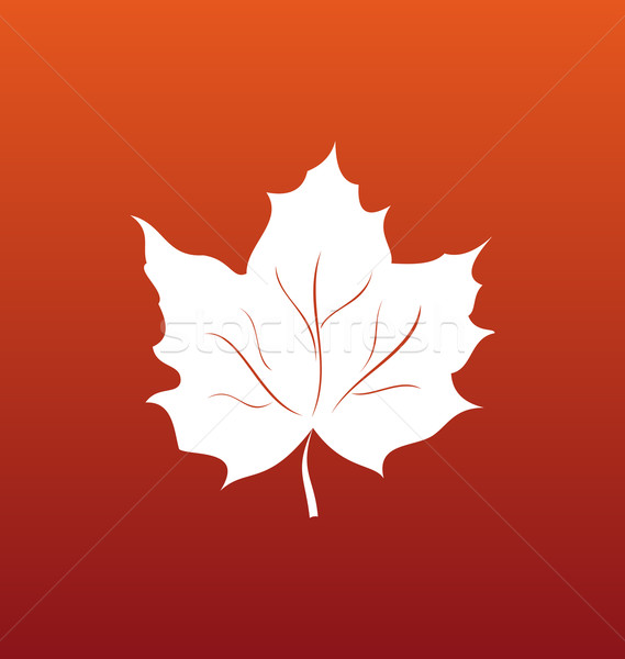 Foglia d'acero arancione illustrazione simbolo foresta colore Foto d'archivio © smeagorl
