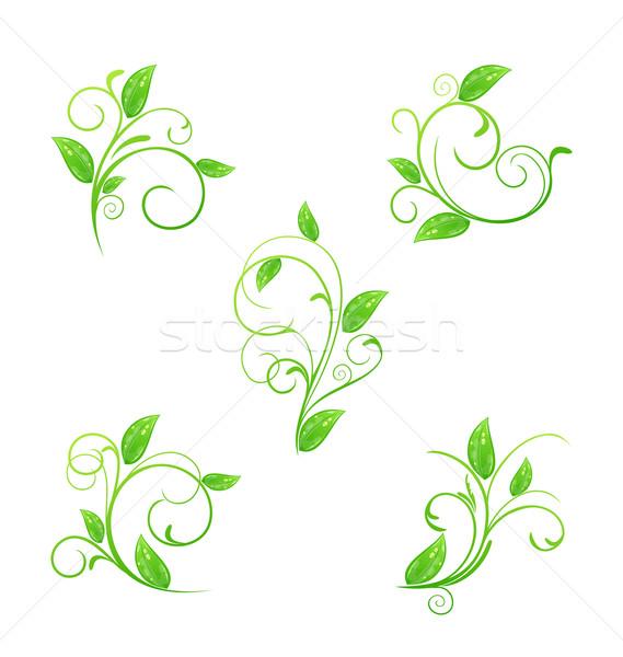 Establecer verde floral elementos eco hojas Foto stock © smeagorl