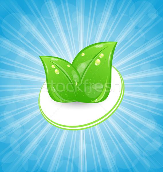 Kártya zöld levelek kék vektor égbolt Stock fotó © smeagorl