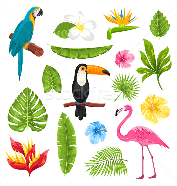 Set Tropical Flowers, Exotic Birds and Plants Stock photo © smeagorl