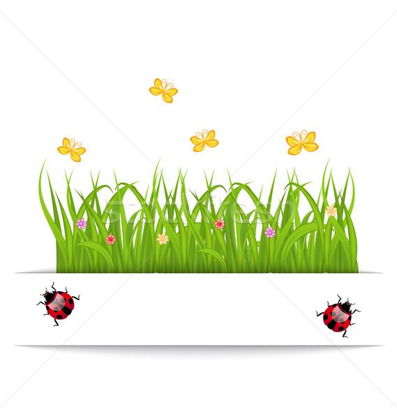 Primavera cartão grama flor borboleta joaninha Foto stock © smeagorl