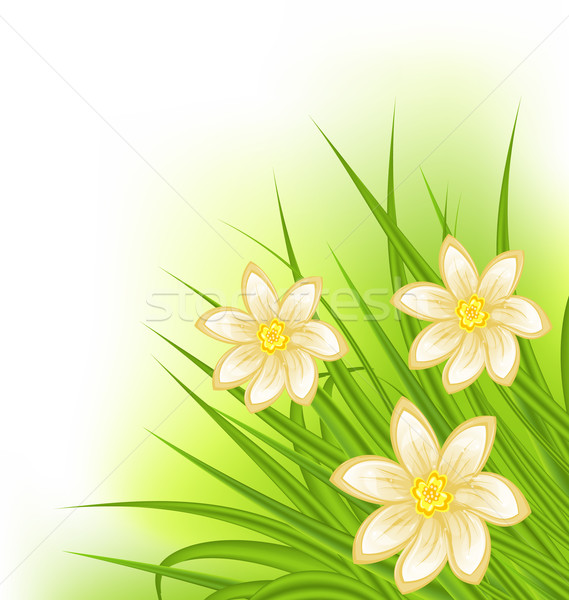 Green grass with flowers, spring background Stock photo © smeagorl