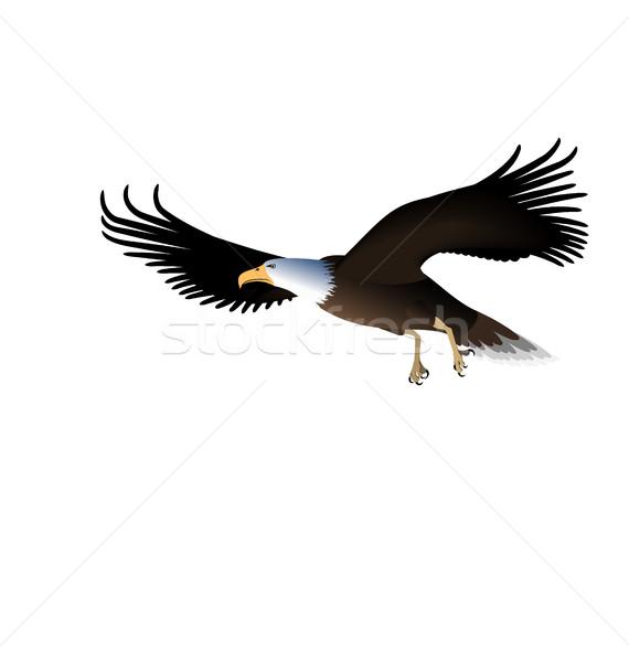 Vliegen adelaar geïsoleerd witte illustratie teken Stockfoto © smeagorl