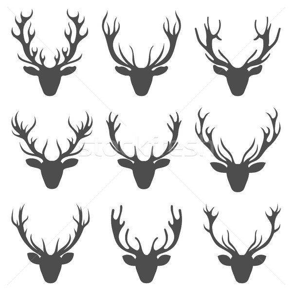 Set Deer Heads, Collection Stag Horns, Isolated on White Background Stock photo © smeagorl
