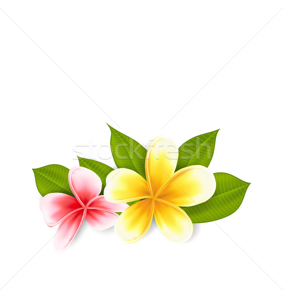 Pink and yellow frangipani (plumeria), exotic flowers isolated o Stock photo © smeagorl