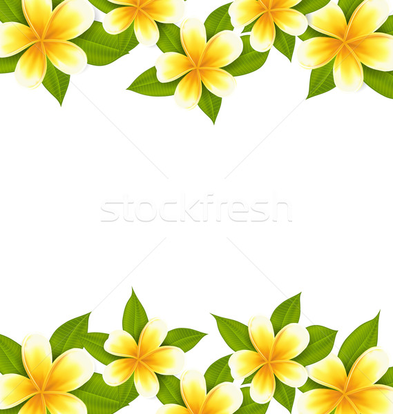 Decoration frame made in frangipani (plumeria), ornament with ex Stock photo © smeagorl