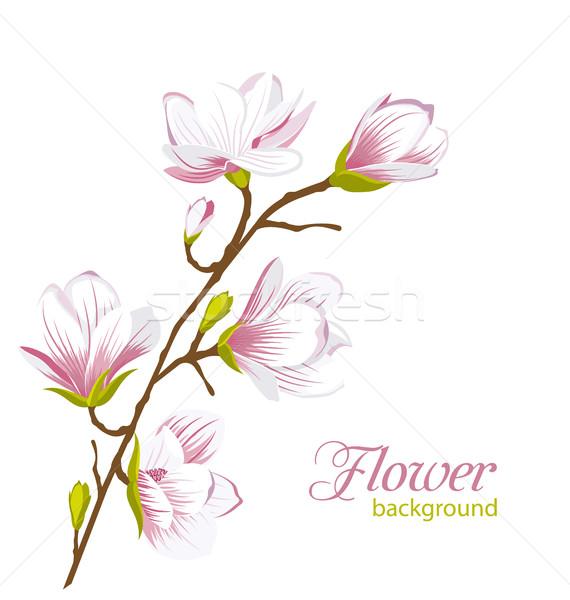 красивой магнолия филиала экзотический цветы иллюстрация Сток-фото © smeagorl