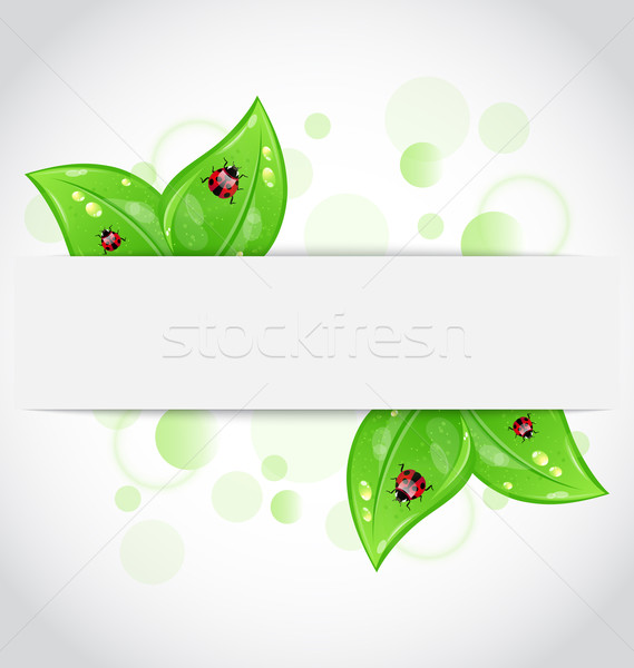 Eco green leaves with ladybugs sticking out of the cut paper Stock photo © smeagorl