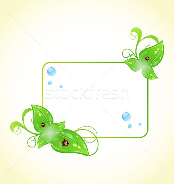Quadro folhas verdes joaninhas ilustração natureza Foto stock © smeagorl