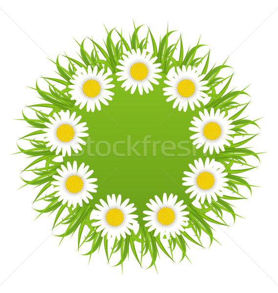Spring freshness round card with grass and camomiles flowers Stock photo © smeagorl