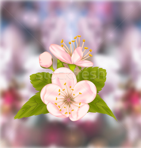 Cherry Blossom, Blur Nature Background Stock photo © smeagorl