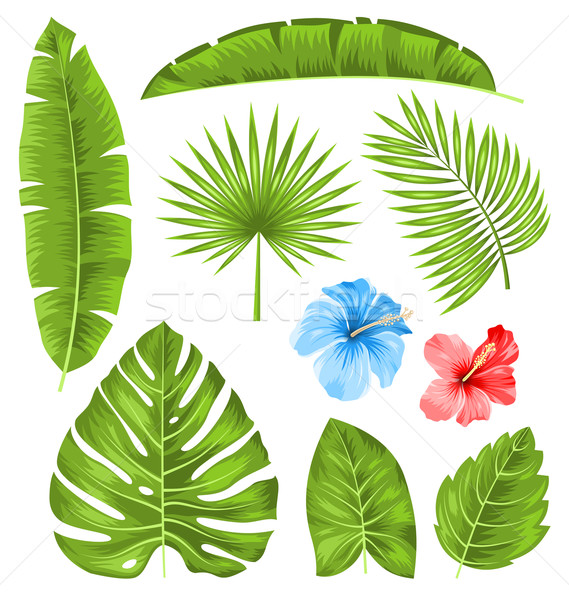 Set of Tropical Leaves, Collection Plants Isolated Stock photo © smeagorl