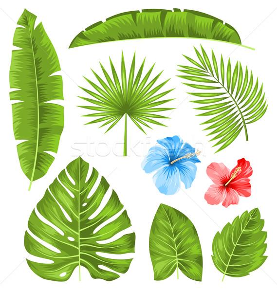 Set tropischen Blätter Sammlung Pflanzen isoliert Stock foto © smeagorl