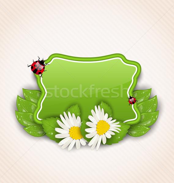 Bonitinho primavera cartão flor margaridas folhas Foto stock © smeagorl