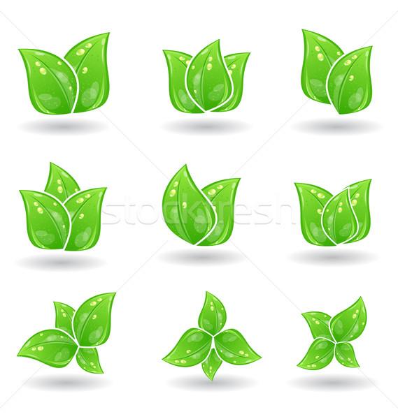Establecer verde eco hojas aislado blanco Foto stock © smeagorl