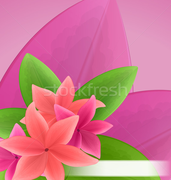 Illustration pink and red frangipani (plumeria), exotic flowers  Stock photo © smeagorl