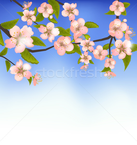 Spring Background of a Blossoming Tree Branch with Flowers Stock photo © smeagorl