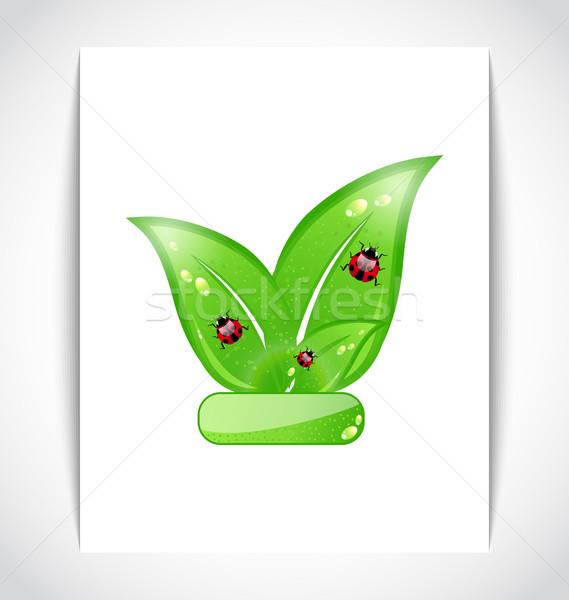 Vert eco laisse coccinelles blanche papier Photo stock © smeagorl
