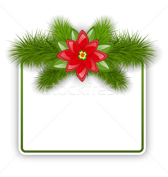 Christmas postcard with fir twigs and flower poinsettia Stock photo © smeagorl