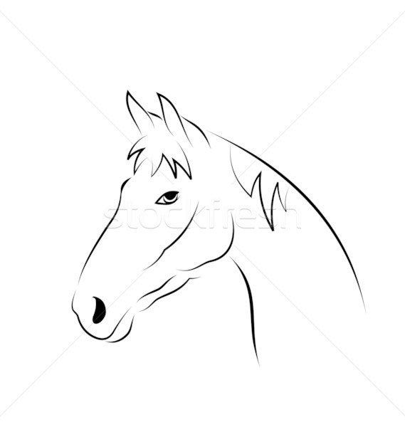 Outline head horse isolated on white background Stock photo © smeagorl