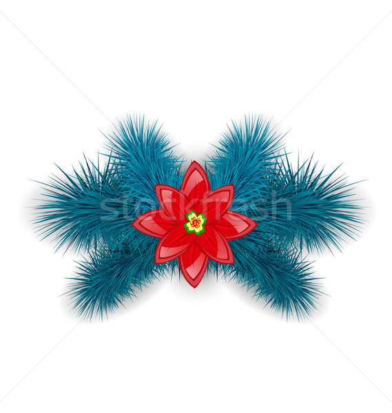 Christmas composition with blue fir twigs and flower poinsettia, Stock photo © smeagorl