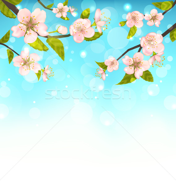 Cherry Blossom, Branches of Tree, Natural Glowing Background Stock photo © smeagorl