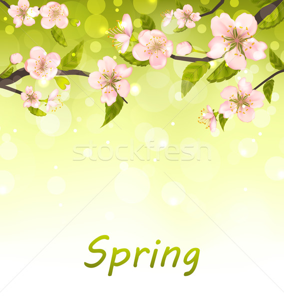 Cute Branches of Cherry Blossom Tree, Natural Background Stock photo © smeagorl
