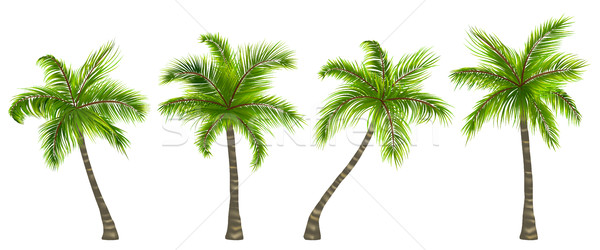 Set Realistic Palm Trees Isolated on White Background Stock photo © smeagorl