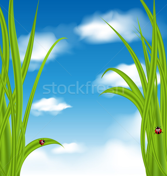 Nature background with green grass and ladybug Stock photo © smeagorl