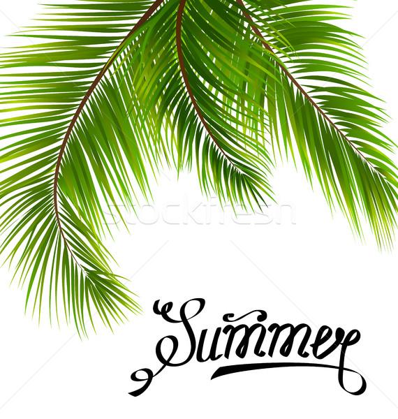 Texte été feuilles de palmier illustration printemps feuille Photo stock © smeagorl