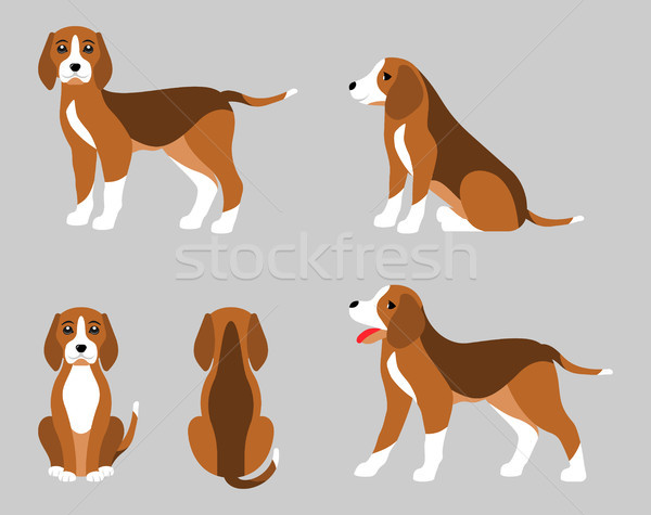 Various Poses of Dog Beagle, Simple Flat Style Stock photo © smeagorl