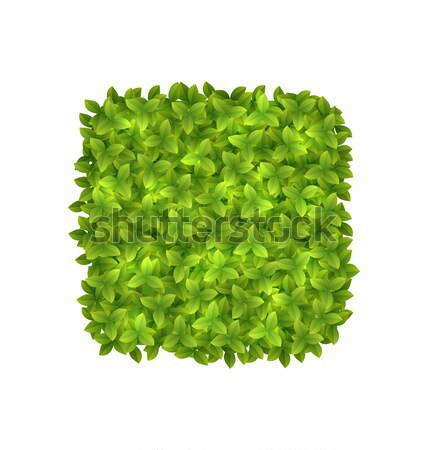 Eco Friendly Label Made in Green Leaves, Stock photo © smeagorl