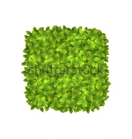 Milieuvriendelijk label groene bladeren illustratie geïsoleerd witte Stockfoto © smeagorl