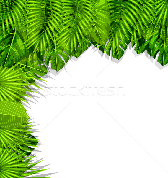 Illustration Summer Nature Background with Green Tropical Leaves Stock photo © smeagorl