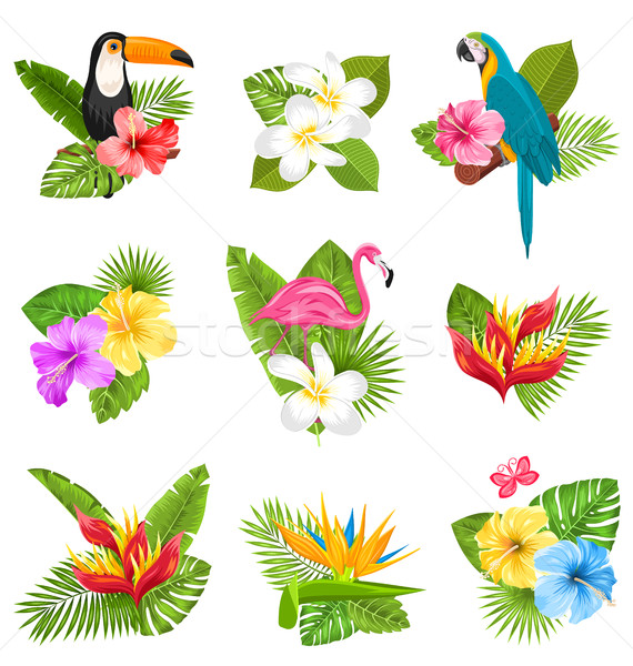 Set Composition with Tropical Flowers, Exotic Bird and Plants Stock photo © smeagorl