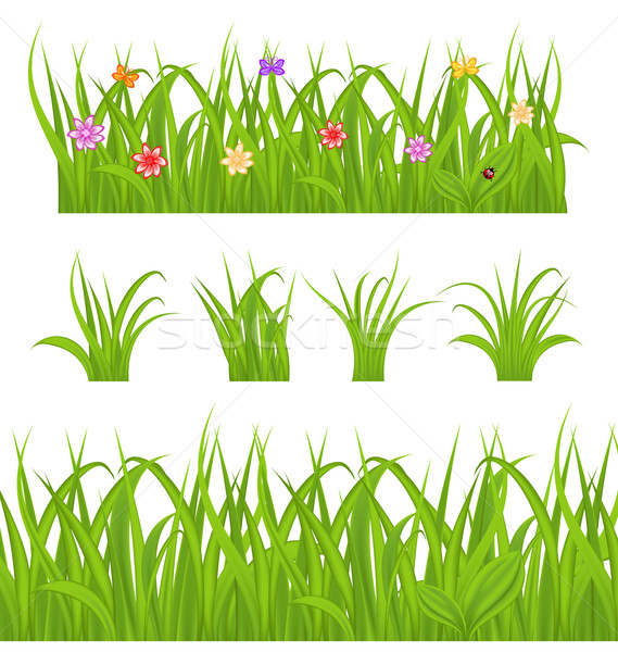 Set green grass isolated on white background Stock photo © smeagorl