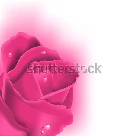 Celebration card with pink rose, copy space for your text Stock photo © smeagorl