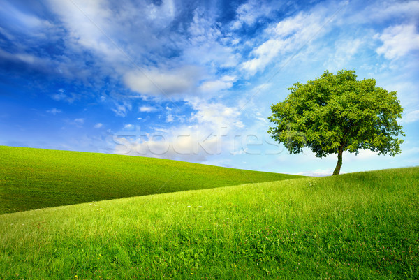 Single tree on top of a green hill Stock photo © Smileus