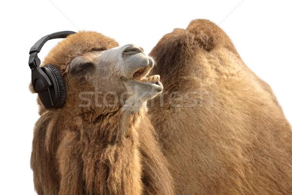 Deve kulaklık şarkı söyleme komik atış Stok fotoğraf © Smileus