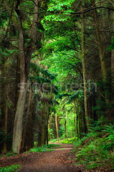 Stock photo: Dreamy scenery in the forest