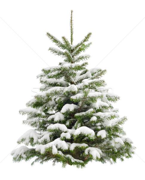 パーフェクト クリスマスツリー 雪 新鮮な 孤立した ストックフォト © Smileus