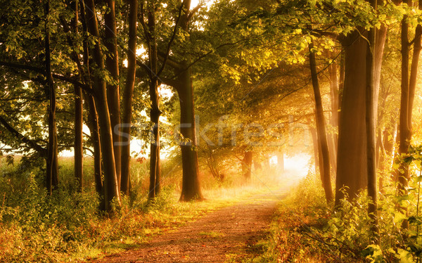 美しい 秋 シーン 徒歩 霧の 森林 ストックフォト © Smileus