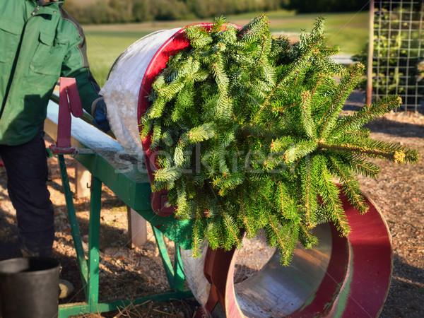 покупке рождественская елка Cut вверх продавцом Сток-фото © Smileus