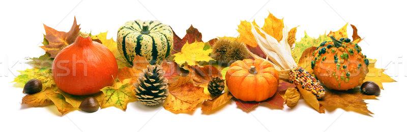 Autumn decoration banner Stock photo © Smileus