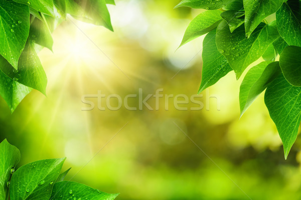 Nature background framed by green leaves Stock photo © Smileus