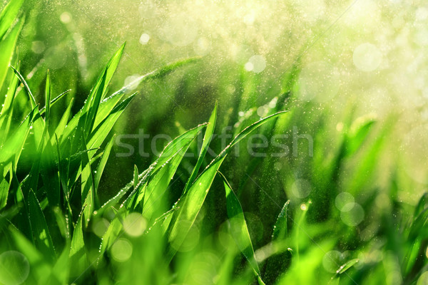 Grass macro with water in the air Stock photo © Smileus
