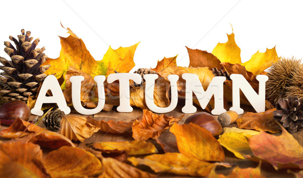 Autumn lettering on dry leaves, white copyspace Stock photo © Smileus