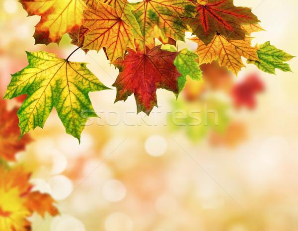 Bokeh красочный осень клен листьев Сток-фото © Smileus